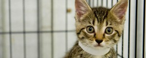 Cat at emergency rescue shelter